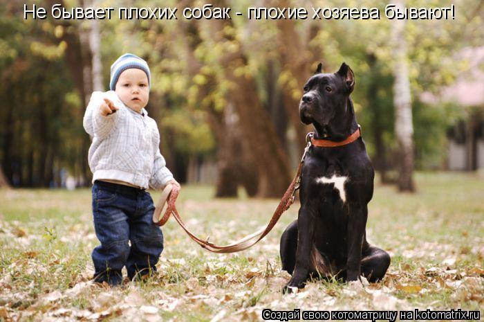 Котоматрица: Не бывает плохих собак - плохие хозяева бывают!