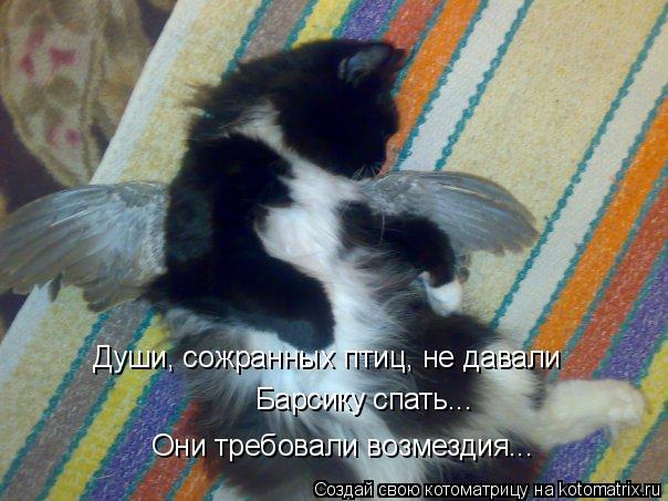 Котоматрица: Души, сожранных птиц, не давали  Барсику спать... Они требовали возмездия...