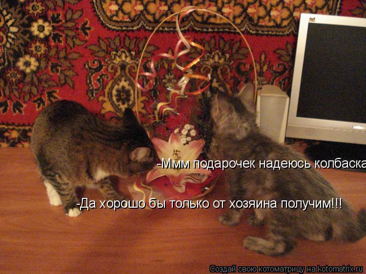 Котоматрица: -Ммм подарочек надеюсь колбаска -Да хорошо бы только от хозяина получим!!!