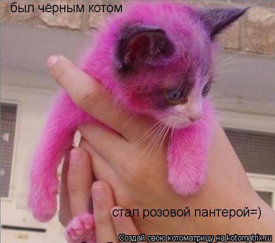 Котоматрица: был чёрным котом стал розовой пантерой=)