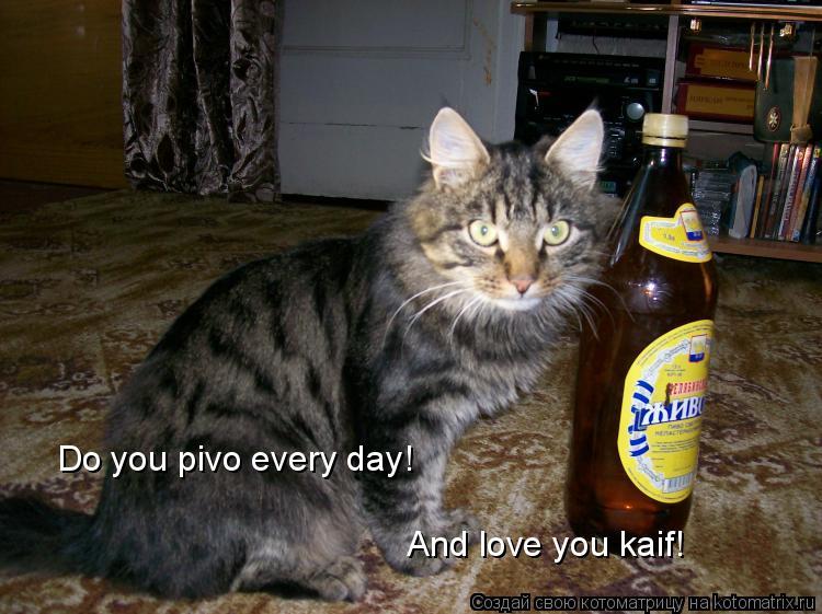 Котоматрица: Do you pivo every day! And love you kaif!