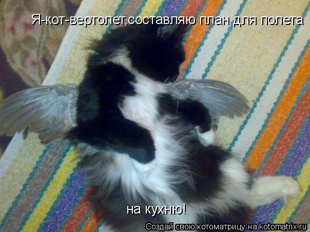 Котоматрица: Я-кот-вертолет,составляю план для полета  на кухню!