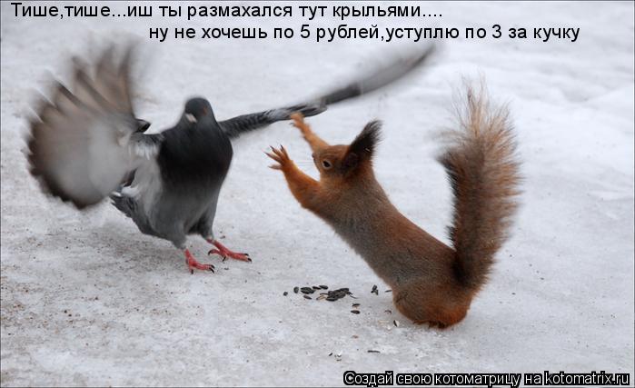 Котоматрица: Тише,тише...иш ты размахался тут крыльями.... ну не хочешь по 5 рублей,уступлю по 3 за кучку