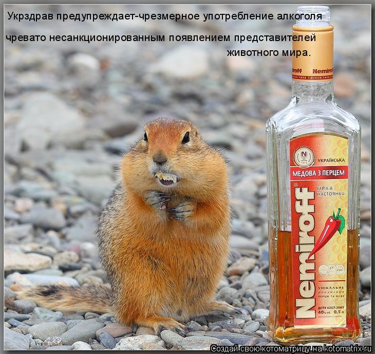 Котоматрица: Укрздрав предупреждает-чрезмерное употребление алкоголя чревато несанкционированным появлением представителей  животного мира.