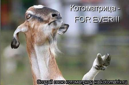 Котоматрица: Котоматрица - FOR EVER!!!