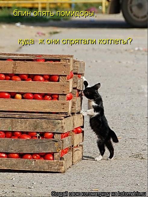 Котоматрица: блин опять помидоры, куда  ж они спрятали котлеты?