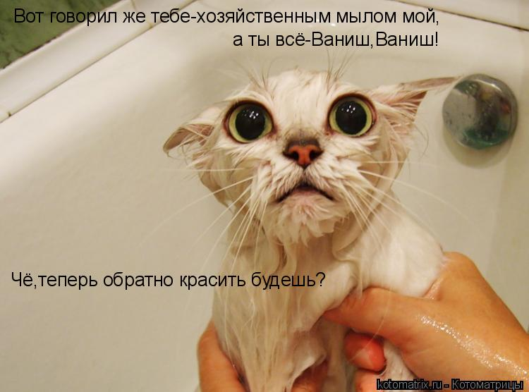 Котоматрица: Вот говорил же тебе-хозяйственным мылом мой, а ты всё-Ваниш,Ваниш! Чё,теперь обратно красить будешь?