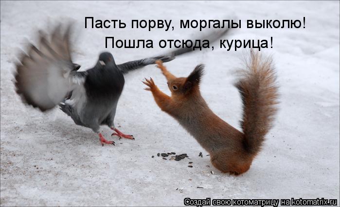 Котоматрица: Пасть порву, моргалы выколю! Пошла отсюда, курица!