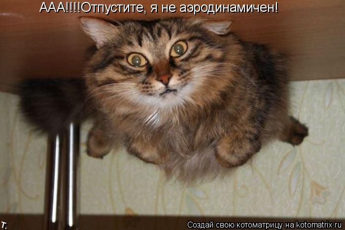 Котоматрица: ААА!!!!Отпустите, я не аэродинамичен!