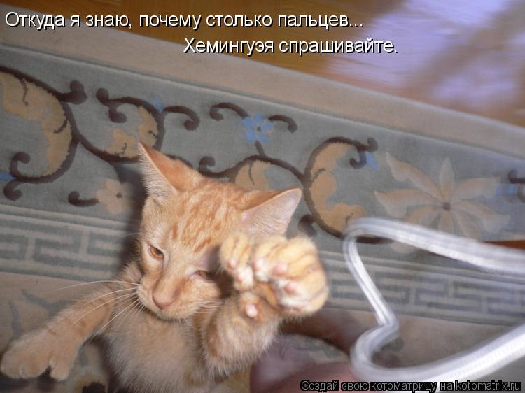 Котоматрица: Откуда я знаю, почему столько пальцев... Хемингуэя спрашивайте.