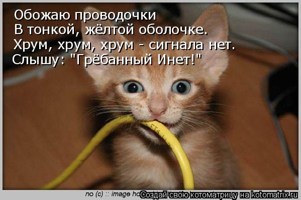 """Котоматрица: Обожаю проводочки В тонкой, жёлтой оболочке. Хрум, хрум, хрум - сигнала нет. Слышу: """"Грёбанный Инет!"""""""