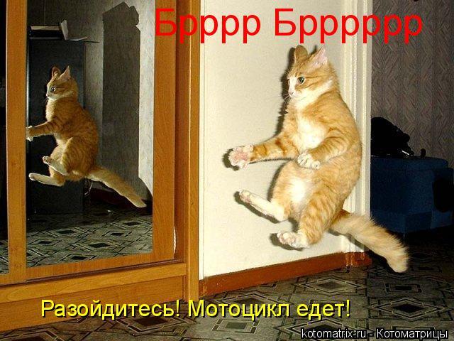 Котоматрица: Брррр Брррррр Разойдитесь! Мотоцикл едет!