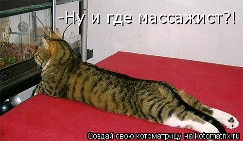 Котоматрица: -Ну и где массажист?!