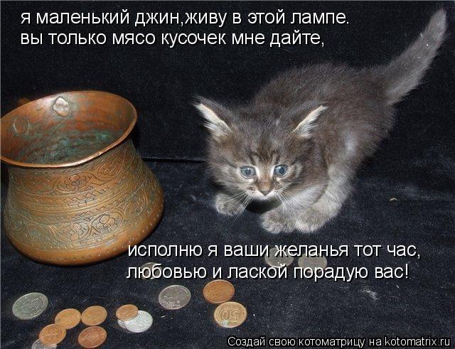 Котоматрица: я маленький джин,живу в этой лампе. вы только мясо кусочек мне дайте, исполню я ваши желанья тот час, любовью и лаской порадую вас!