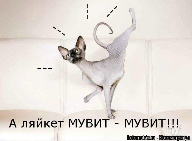 Котоматрица: А ляйкет МУВИТ - МУВИТ!!! --- --- --- ---