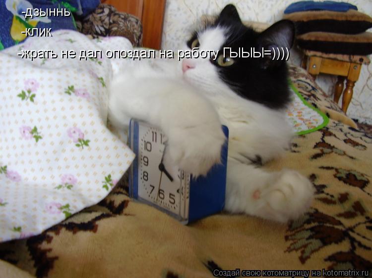 Котоматрица: -дзыннь -клик -жрать не дал опоздал на работу ГЫЫЫ=))))