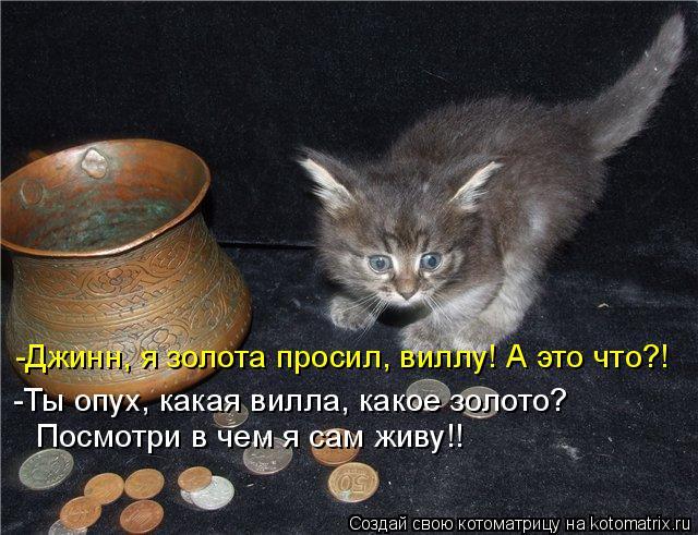 Котоматрица: -Джинн, я золота просил, виллу! А это что?! -Ты опух, какая вилла, какое золото? Посмотри в чем я сам живу!!