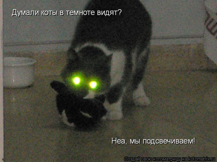 Котоматрица: Думали коты в темноте видят? Неа, мы подсвечиваем!