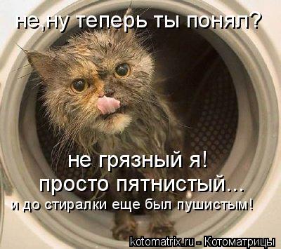 Котоматрица: не грязный я! не,ну теперь ты понял? просто пятнистый... и до стиралки еще был пушистым!