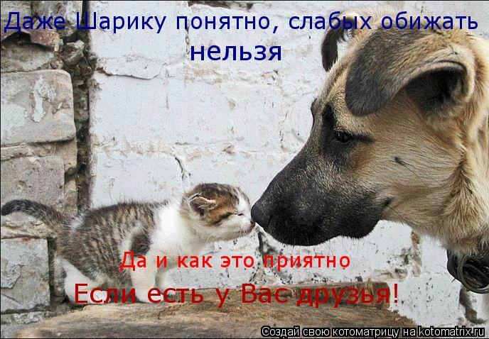 Котоматрица: Даже Шарику понятно, слабых обижать нельзя Да и как это приятно Если есть у Вас друзья!