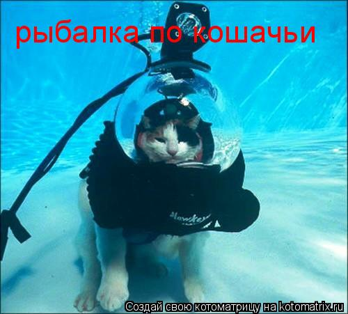 Котоматрица: рыбалка по кошачьи