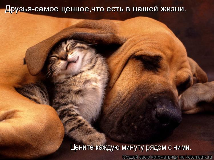 Котоматрица: Цените каждую минуту рядом с ними. Друзья-самое ценное,что есть в нашей жизни.