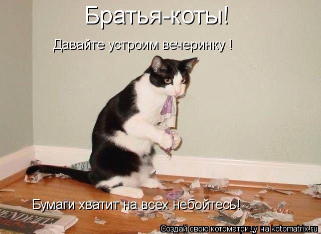 Котоматрица: Братья-коты! Бумаги хватит на всех небойтесь! Давайте устроим вечеринку !