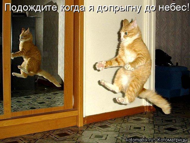 Котоматрица: Подождите когда я допрыгну до небес!