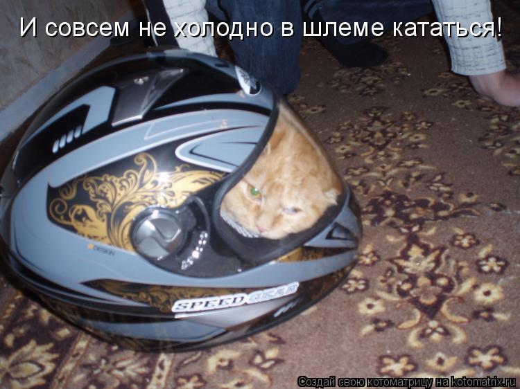 Котоматрица: И совсем не холодно в шлеме кататься!