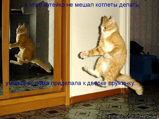 Котоматрица: ... а чтоб котейко не мешал котлеты делать,  умница-хозяйка приделала к дверке пружинку...