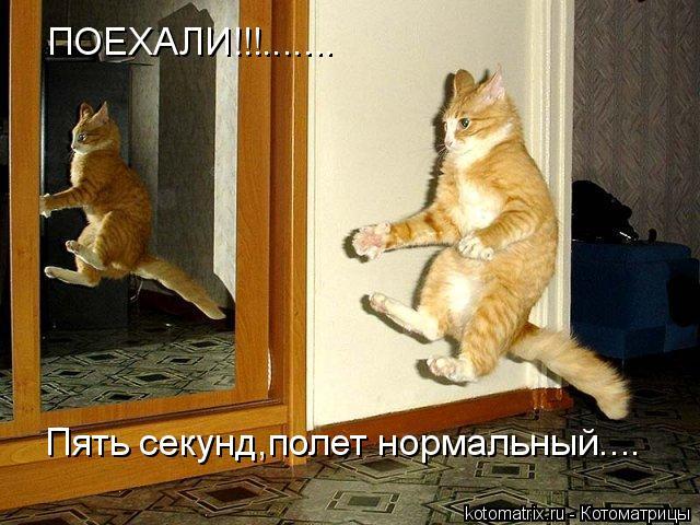 Котоматрица: ПОЕХАЛИ!!!....... Пять секунд,полет нормальный....
