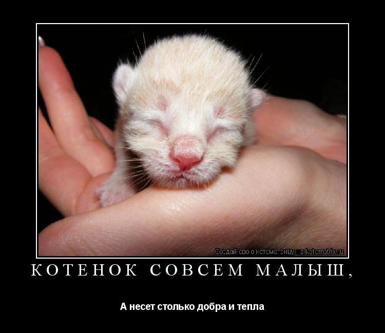 Котоматрица: Котенок совсем малыш, А несет столько добра и тепла