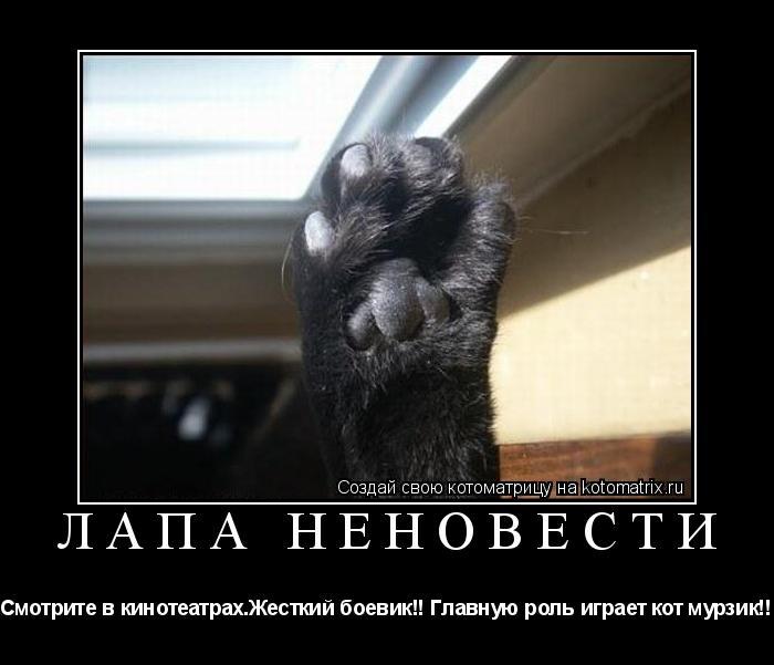 Котоматрица: ЛАПА НЕНОВЕСТИ Смотрите в кинотеатрах.Жесткий боевик!! Главную роль играет кот мурзик!!