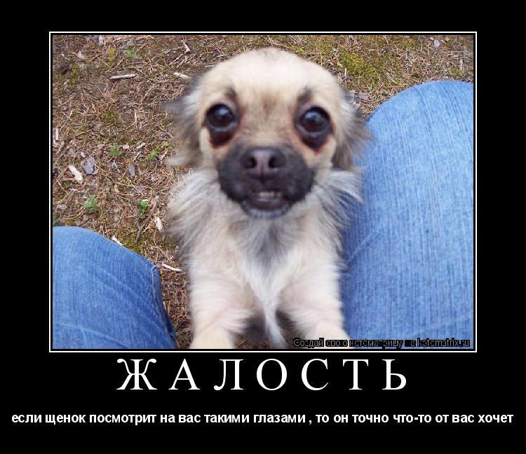 Котоматрица: ЖАЛОСТЬ если щенок посмотрит на вас такими глазами , то он точно что-то от вас хочет