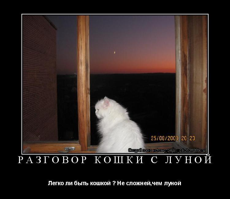 Котоматрица: Разговор кошки с луной  Легко ли быть кошкой ? Не сложней,чем луной