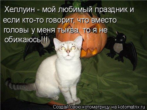 Котоматрица: Хеллуин - мой любимый праздник и  если кто-то говорит, что вместо головы у меня тыква, то я не обижаюсь!!!