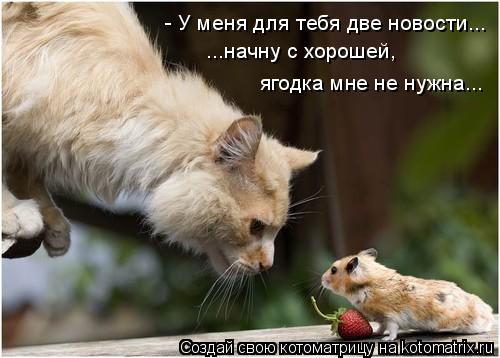 Котоматрица: - У меня для тебя две новости... ...начну с хорошей, ягодка мне не нужна...