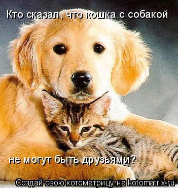 Котоматрица: Кто сказал, что кошка с собакой не могут быть друзьями?