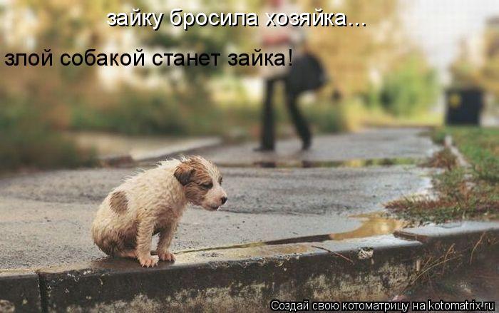 Котоматрица: зайку бросила хозяйка... злой собакой станет зайка!