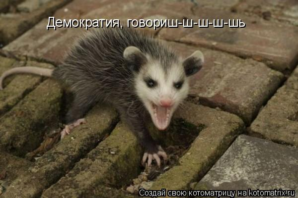 Котоматрица: Демократия, говориш-ш-ш-ш-шь