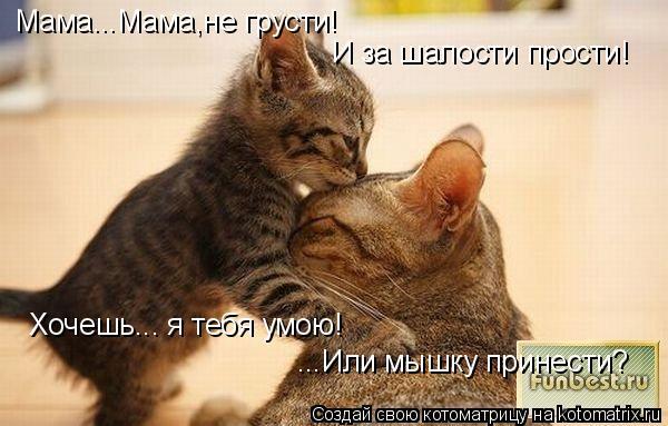 Котоматрица: Мама...Мама,не грусти! И за шалости прости! Хочешь... я тебя умою! ...Или мышку принести?