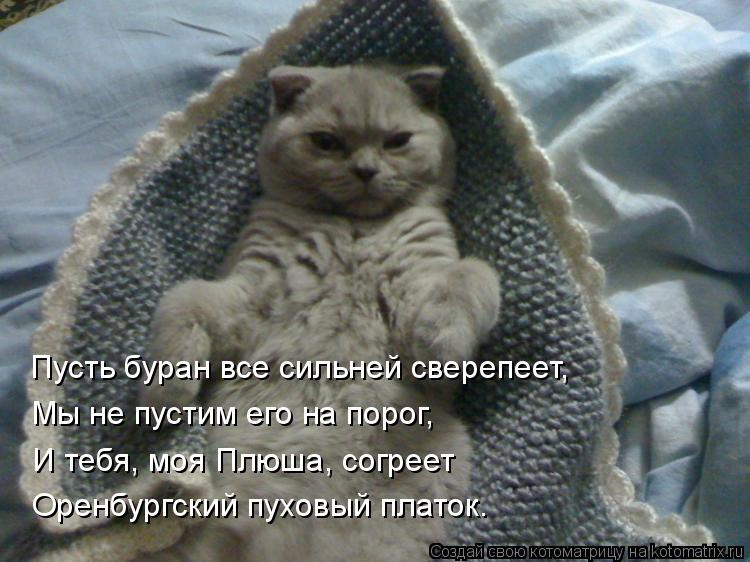 Котоматрица: Пусть буран все сильней сверепеет, Мы не пустим его на порог, И тебя, моя Плюша, согреет Оренбургский пуховый платок.