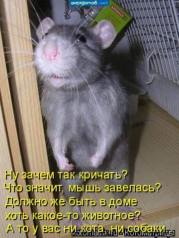 Котоматрица: Ну зачем так кричать? Что значит, мышь завелась? Должно же быть в доме хоть какое-то животное? А то у вас ни кота, ни собаки...