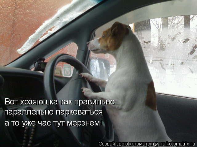 Котоматрица: Вот хозяюшка как правильно  а то уже час тут мерзнем! параллельно парковаться
