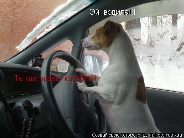 Котоматрица: Эй, водила!!! Ты где права покупал?!!