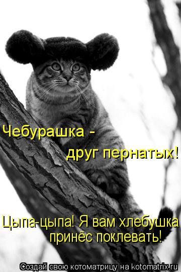 Котоматрица: Чебурашка -  друг пернатых! Цыпа-цыпа! Я вам хлебушка  принёс поклевать!