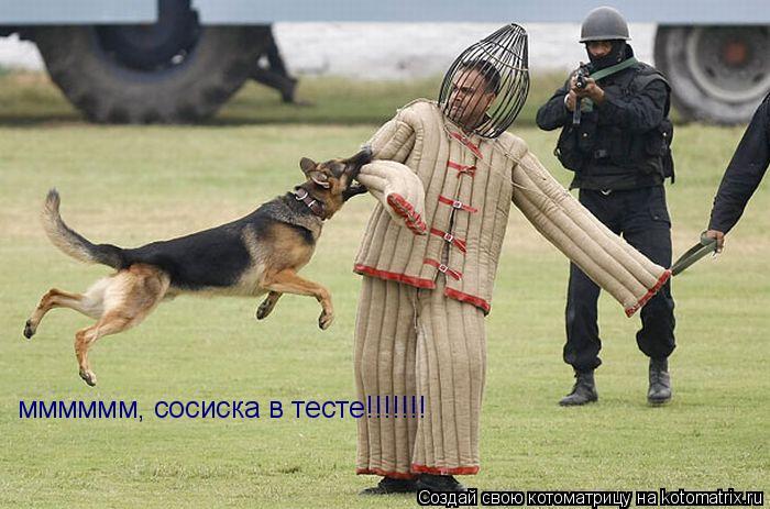 Котоматрица: мммммм, сосиска в тесте!!!!!!!