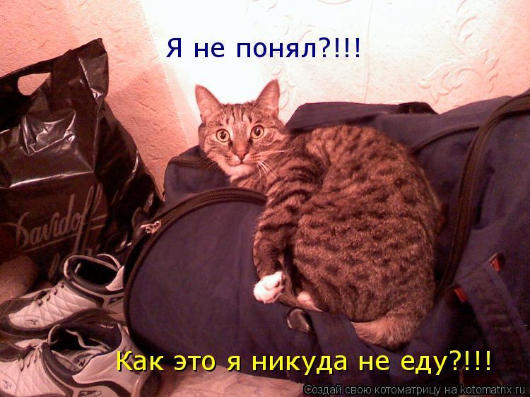 Котоматрица: Я не понял?!!!  Как это я никуда не еду?!!!