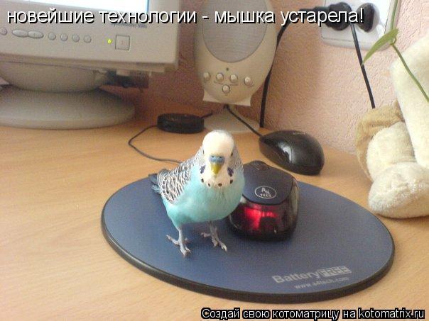 Котоматрица: новейшие технологии - мышка устарела!