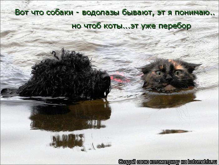 Котоматрица: Вот что собаки - водолазы бывают, эт я понимаю.. но чтоб коты...эт уже перебор